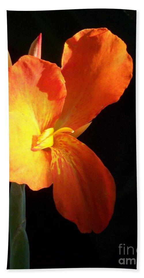 Garden Bath Sheet featuring the photograph Orange Flower Canna by Eric Schiabor