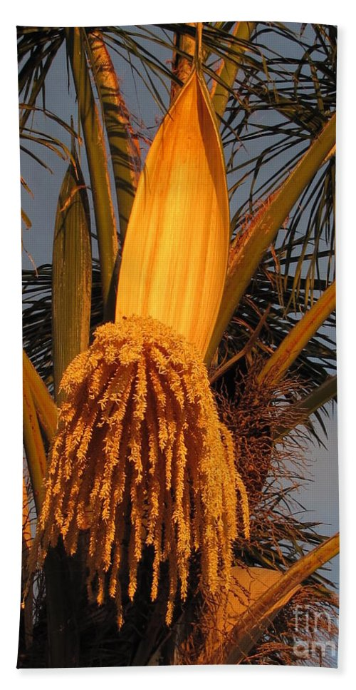Palm Trees Hand Towel featuring the photograph Orange Glow by Sheryl Young