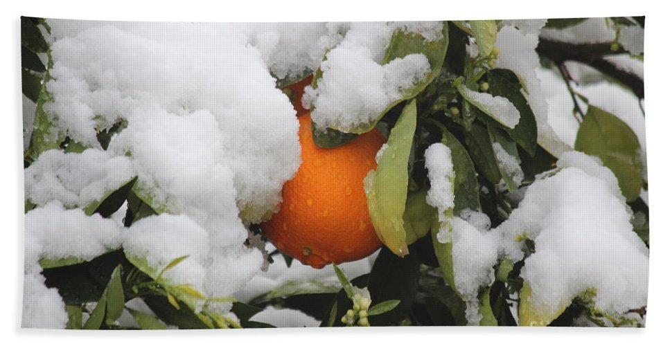 Orange Tree Hand Towel featuring the photograph Orange In Snow by Sheryl Young