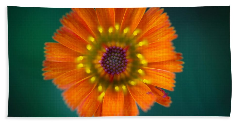 Orange Hand Towel featuring the photograph Orange Is The New Black by Shane Holsclaw