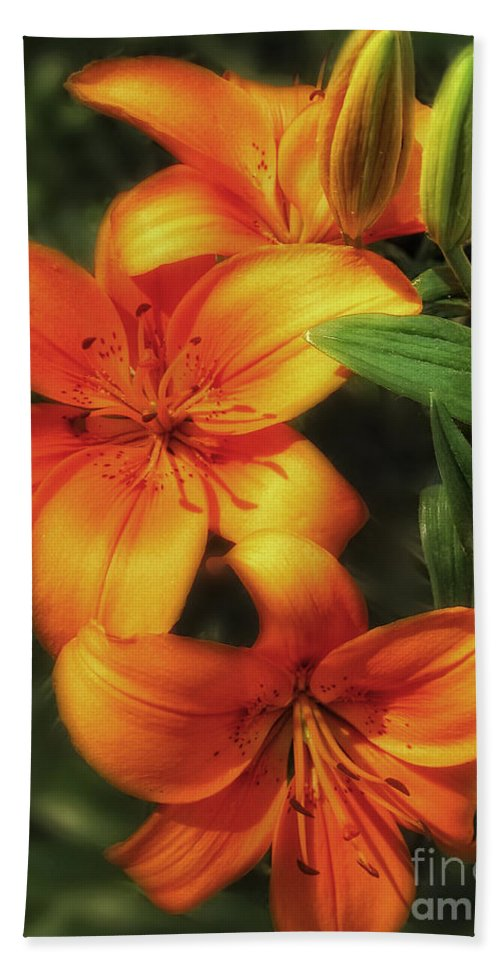 Orange Hand Towel featuring the photograph Orange Lillies by Timothy Hacker