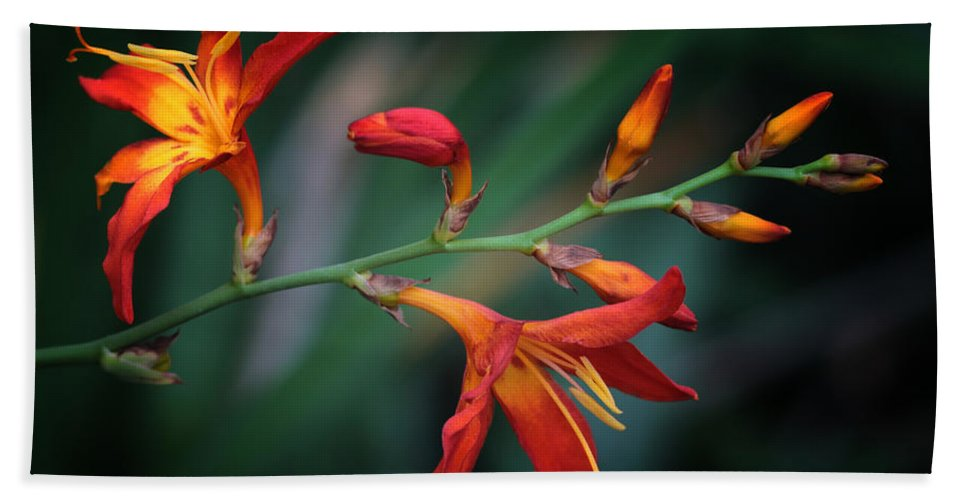Lily Hand Towel featuring the photograph Orange Lily by Lucy VanSwearingen