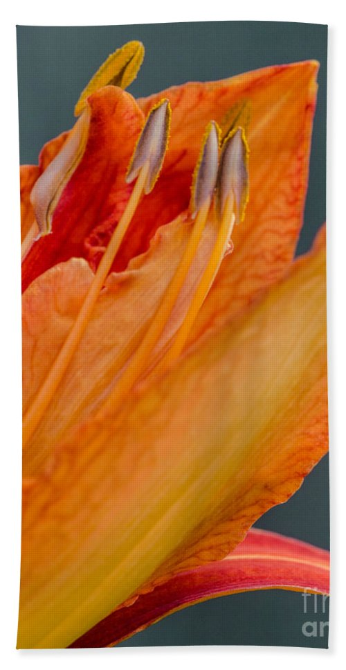 Lily Hand Towel featuring the photograph Orange Lily by Pat Lucas