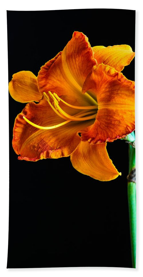 Lily Hand Towel featuring the photograph Orange Lily by Randy Walton