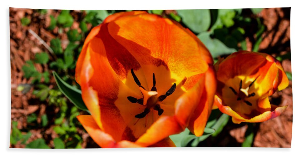 Tulip Bath Sheet featuring the photograph Orange Orange by Sherman Perry