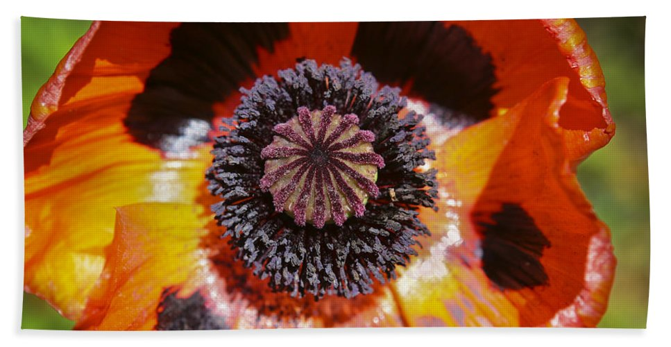 Poppy Hand Towel featuring the photograph Orange Poppy by Belinda Greb