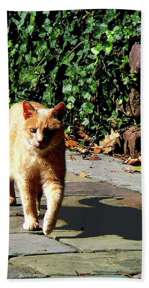 Cat Hand Towel featuring the photograph Orange Tabby Taking A Walk by Susan Savad