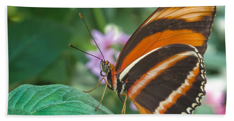 Antennae Hand Towel featuring the photograph Orange Tiger Or Banded Orange Butterfly by David and Carol Kelly