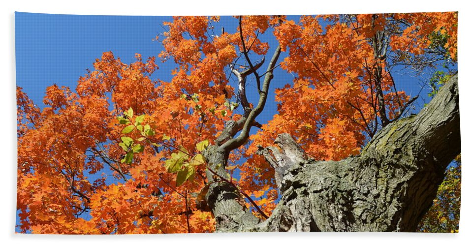 Landscape Hand Towel featuring the photograph Orange Tree by Maja Opacic