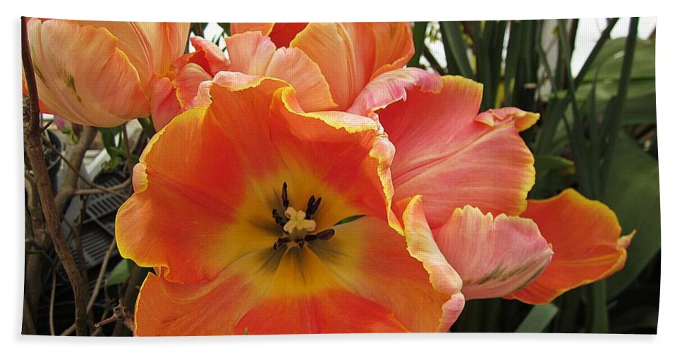Hand Towel featuring the photograph Orange Tulips by MTBobbins Photography