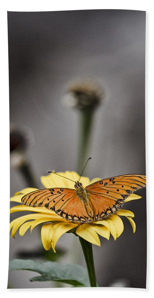 Orange Bath Sheet featuring the photograph Orange Winged Butterfly by Douglas Barnard