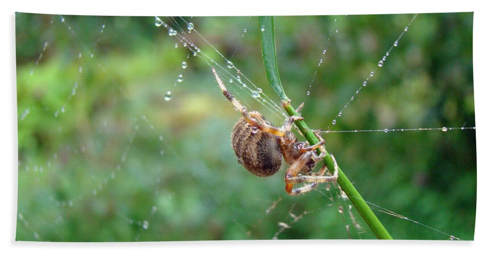 Spider Bath Sheet featuring the photograph Orb Weaver Spider - Araneus by Mother Nature