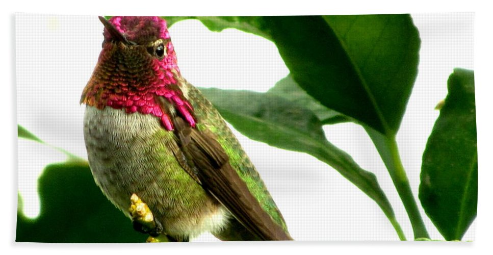 Hummingbird Hand Towel featuring the photograph Orchard Friend by Marilyn Smith