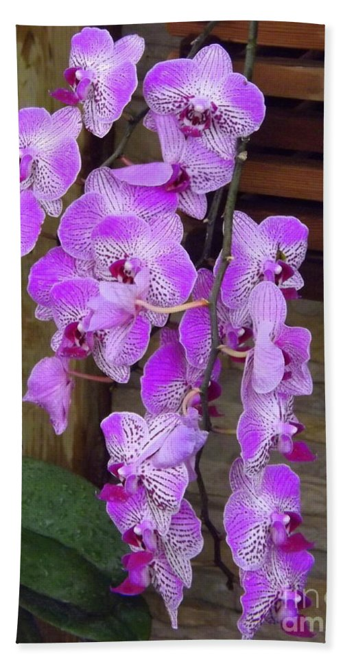 Orchid Bath Sheet featuring the photograph Orchid Beauties by Lingfai Leung