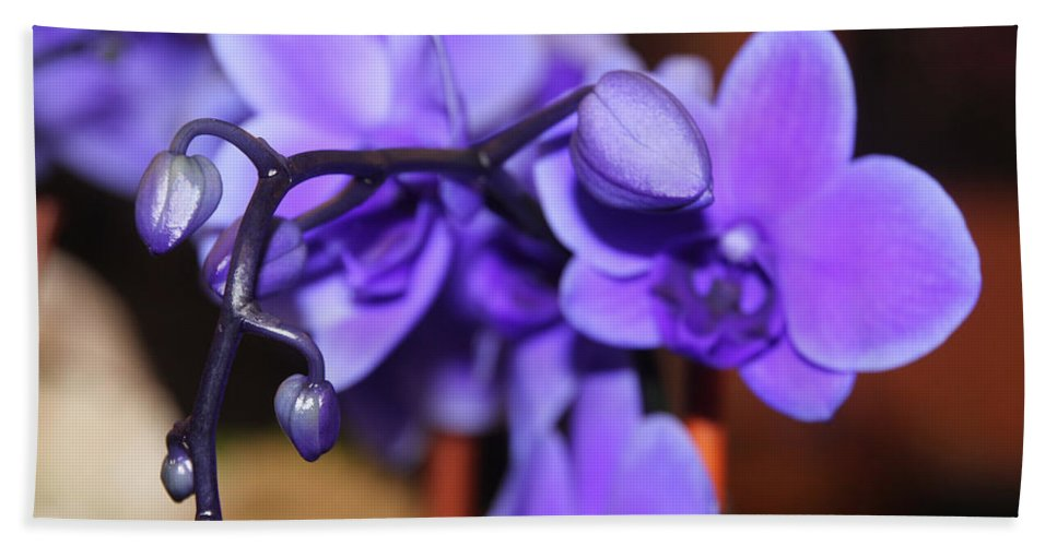 Orchid Bath Sheet featuring the photograph Orchid by Ericamaxine Price