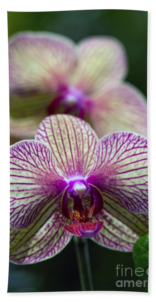 Flowers Hand Towel featuring the photograph Orchid One by Ken Frischkorn