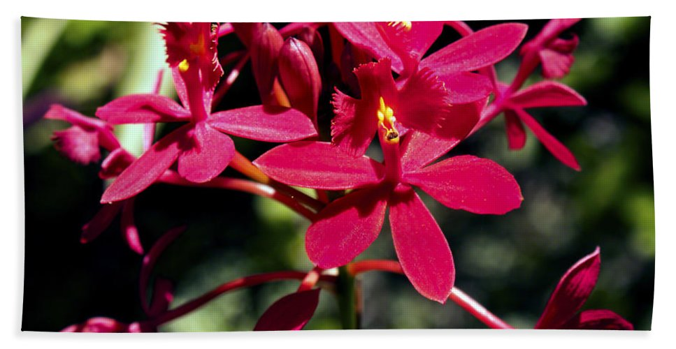 Fine Art Photography Hand Towel featuring the photograph Orchid Study V by Patricia Griffin Brett