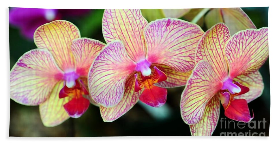 Orchid Hand Towel featuring the photograph Orchid Trio by Kathleen Struckle