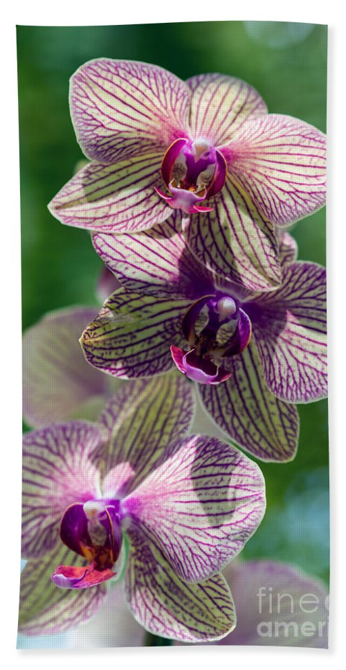 Flowers Hand Towel featuring the photograph Orchid Two by Ken Frischkorn
