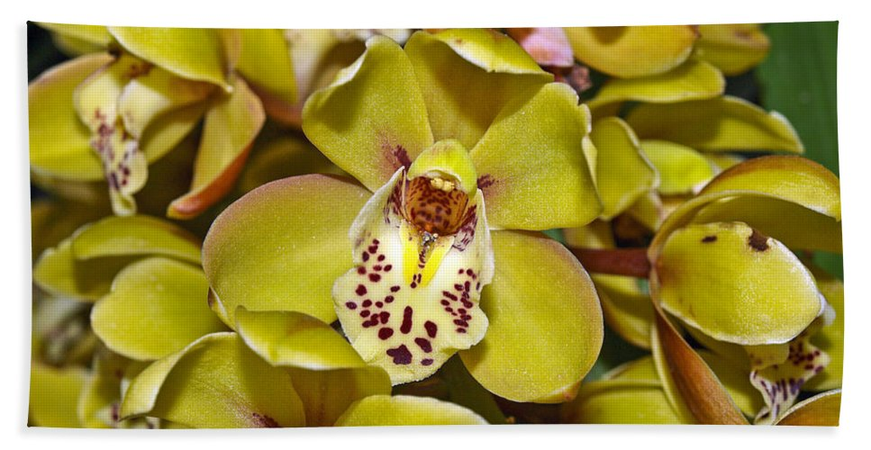 Orchid Flowers Hand Towel featuring the photograph Orchids by Howard Stapleton