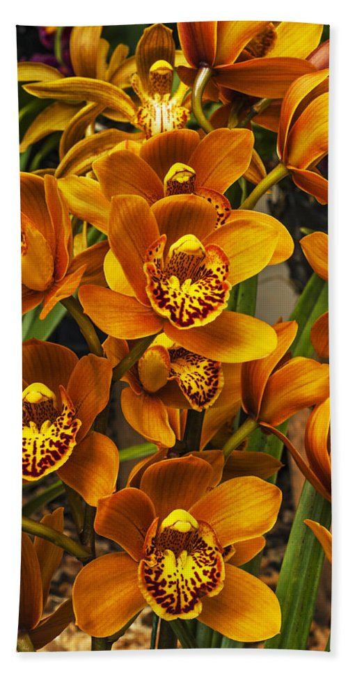 Orchid Hand Towel featuring the photograph Orchids by Jess Kraft