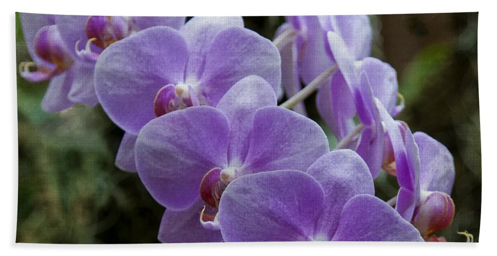 Orchids Hand Towel featuring the photograph Orchids Square Format Img 5437 by Greg Kluempers