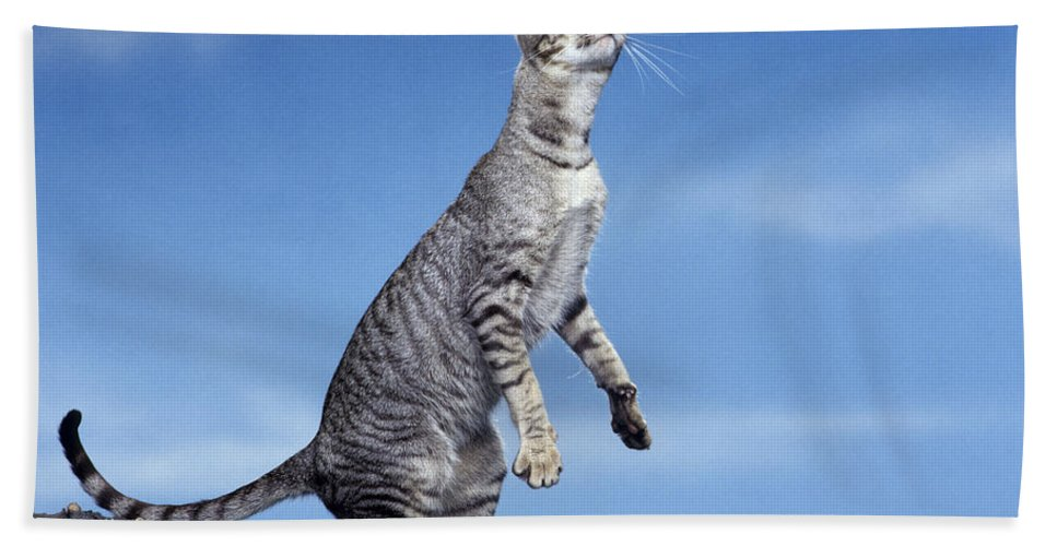 Cat Bath Sheet featuring the photograph Oriental Cat by Jean-Michel Labat