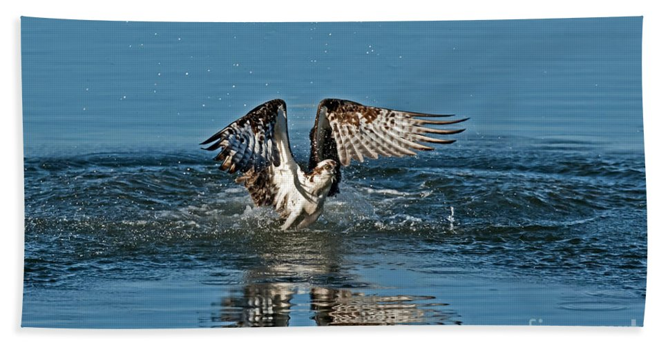 Animal Hand Towel featuring the photograph Osprey Getting Out Of The Water by Anthony Mercieca
