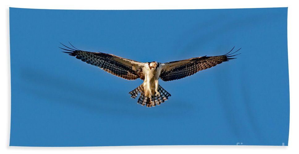 Animal Hand Towel featuring the photograph Osprey Hovering by Anthony Mercieca