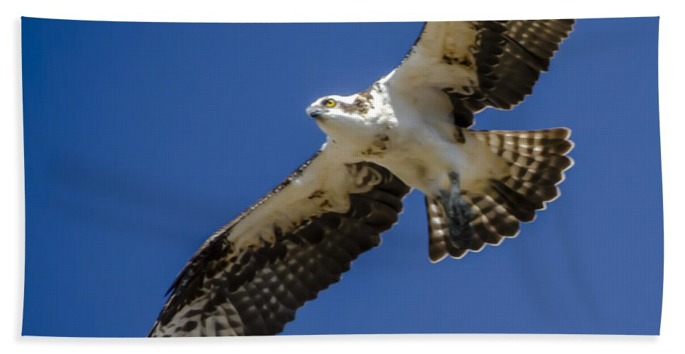 Osprey In Flight Hand Towel featuring the photograph Osprey In Flight by Dale Powell