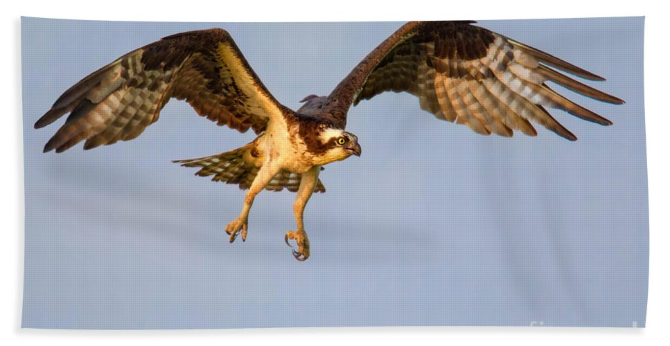 Osprey Bath Sheet featuring the photograph Osprey In Flight by Jerry Fornarotto