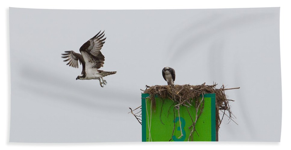 Chesapeake Bay Bath Sheet featuring the photograph Osprey In Flight by Leah Palmer