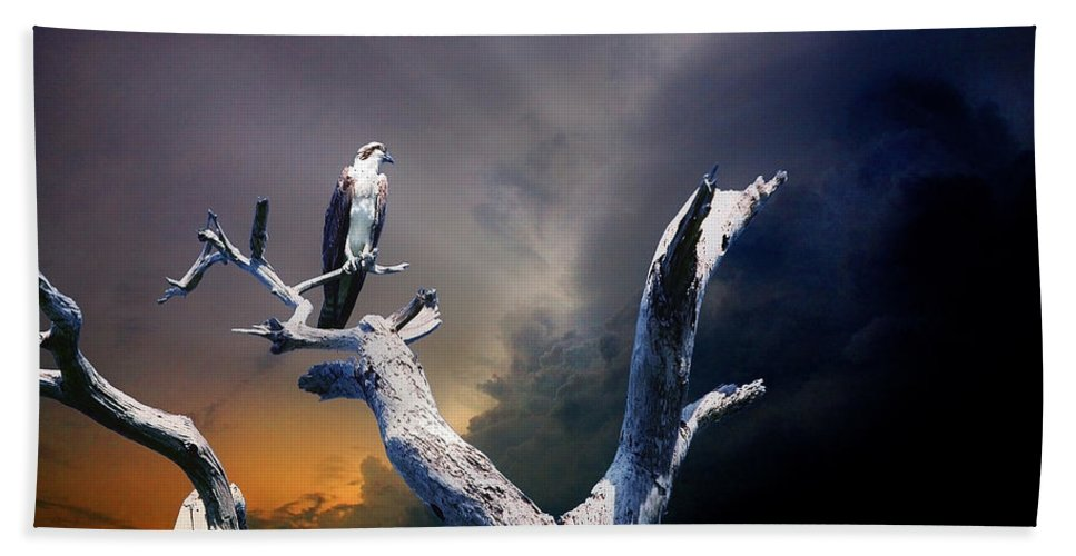Osprey Hand Towel featuring the photograph Osprey by Mal Bray