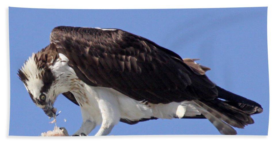 Maine Wildlife Bath Sheet featuring the photograph Osprey by Sharon Fiedler