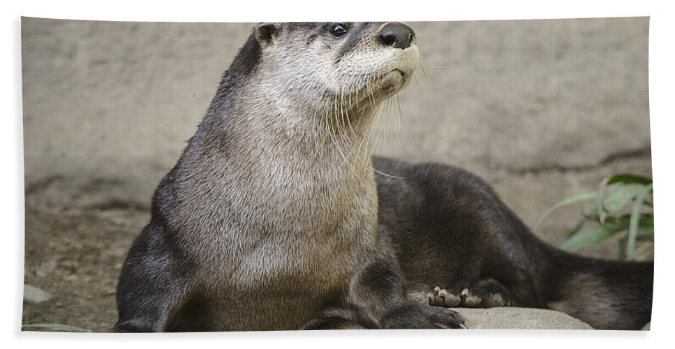 North American Hand Towel featuring the photograph Otter North American by LeeAnn McLaneGoetz McLaneGoetzStudioLLCcom
