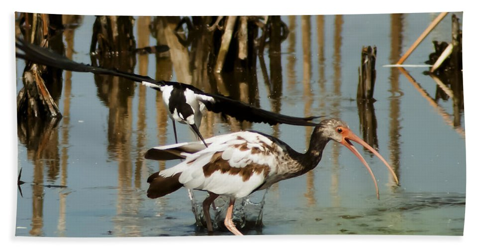 Black-necked Stilt Hand Towel featuring the photograph Ouch by Norman Johnson