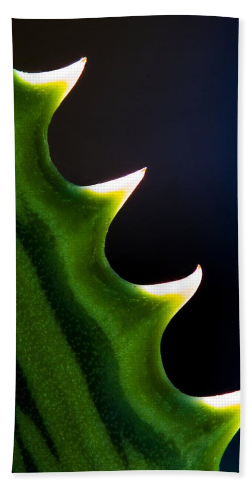Succulent Bath Sheet featuring the photograph Ouch by Robert Woodward