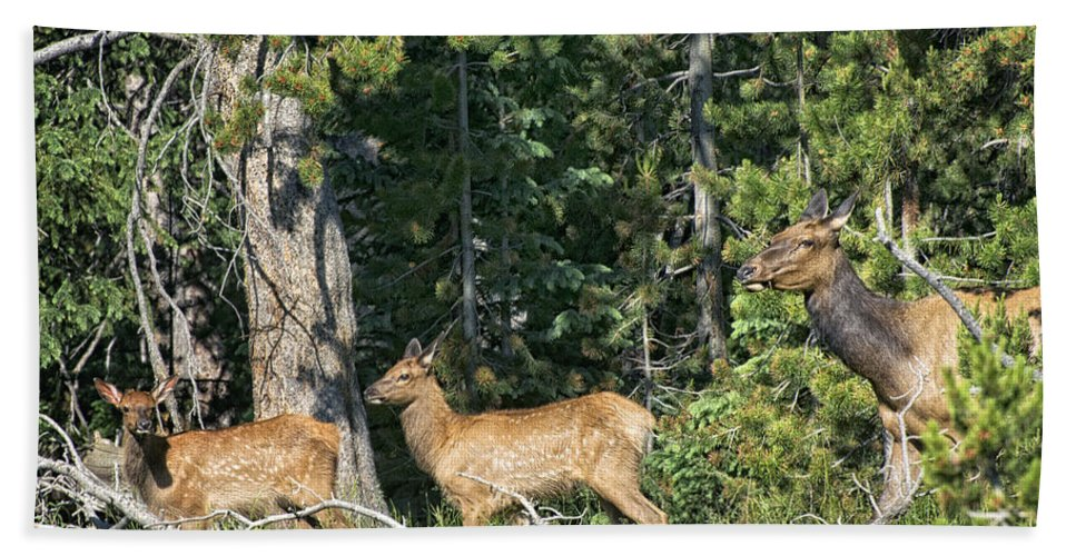 Elk Hand Towel featuring the photograph Out For A Walk by Claudia Kuhn
