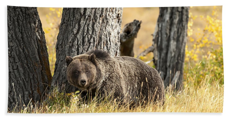 Wildlife Hand Towel featuring the photograph Out For Lunch by Sandra Bronstein