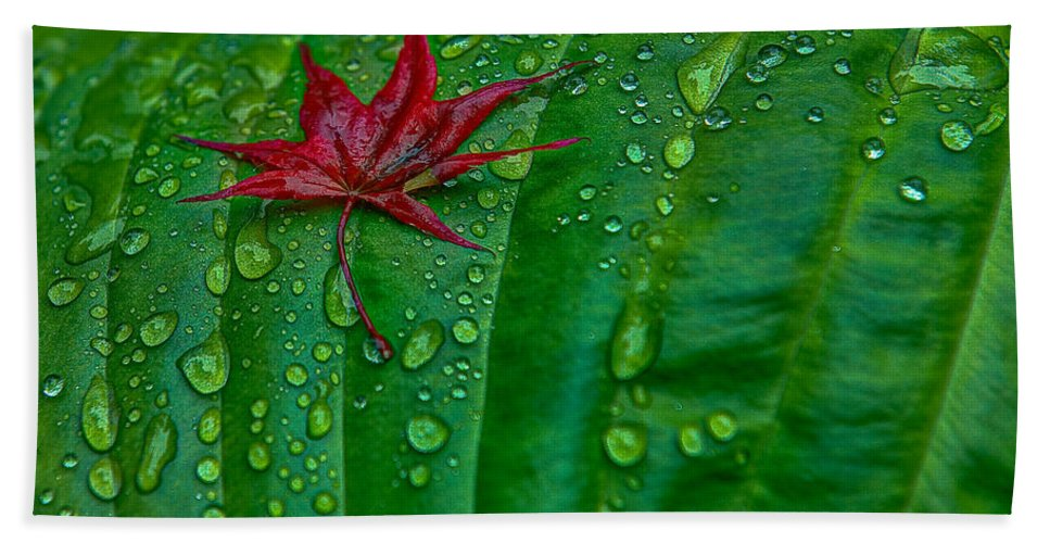 Maple Leaf Bath Sheet featuring the photograph Out Of Place by Rod Wiens