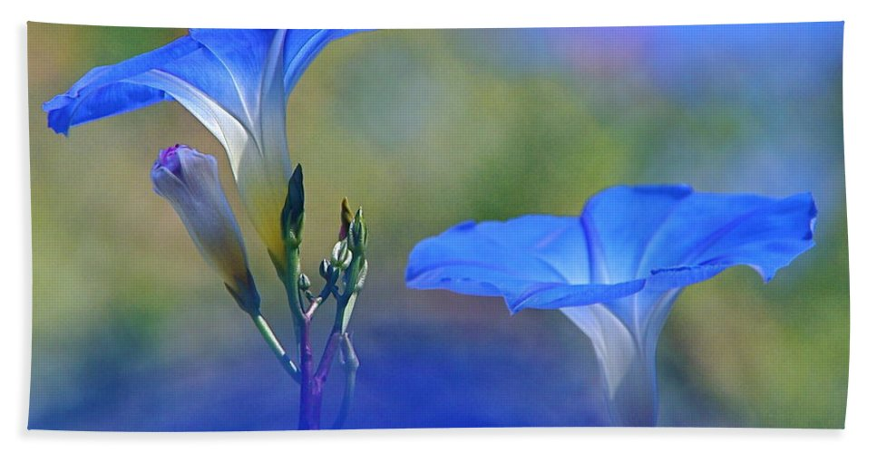 Morning Glories Bath Sheet featuring the photograph Out Of The Blue by Byron Varvarigos