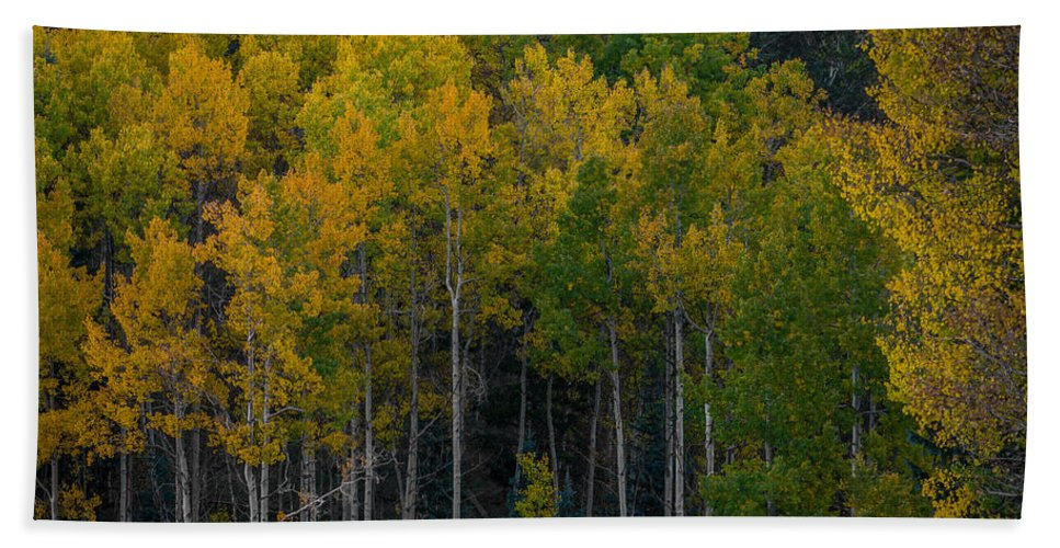 Autumn Hand Towel featuring the photograph Overseers by Ernie Echols