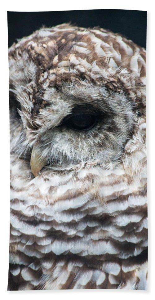Beak Hand Towel featuring the photograph Owl by Gaurav Singh