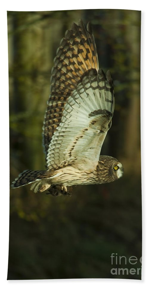 Owl Hand Towel featuring the photograph Owl In Flight by Rod Wiens