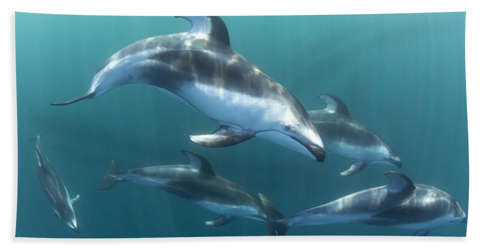 534184 Bath Towel featuring the photograph Pacific White-sided Dolphin Pod At Nine by Richard Herrmann