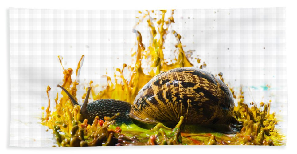 Creativity Hand Towel featuring the photograph Paint Sculpture And Snail by Guy Viner