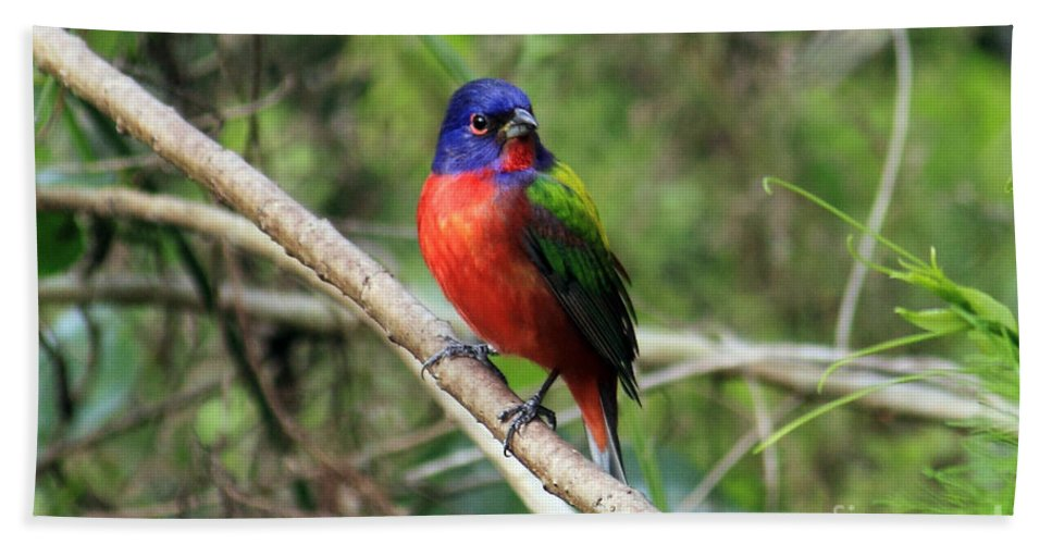 Painted Bunting Bath Sheet featuring the photograph Painted Bunting Photo by Meg Rousher
