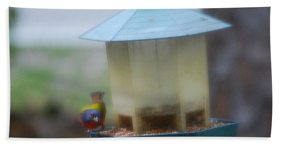 Feeding At Bird Feeder Hand Towel featuring the photograph Painted Bunting by Robert Floyd