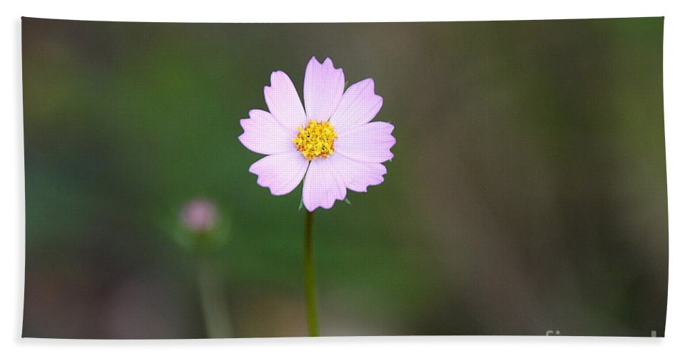 Flower Bath Sheet featuring the photograph Painted Desert Floral by Susan Herber