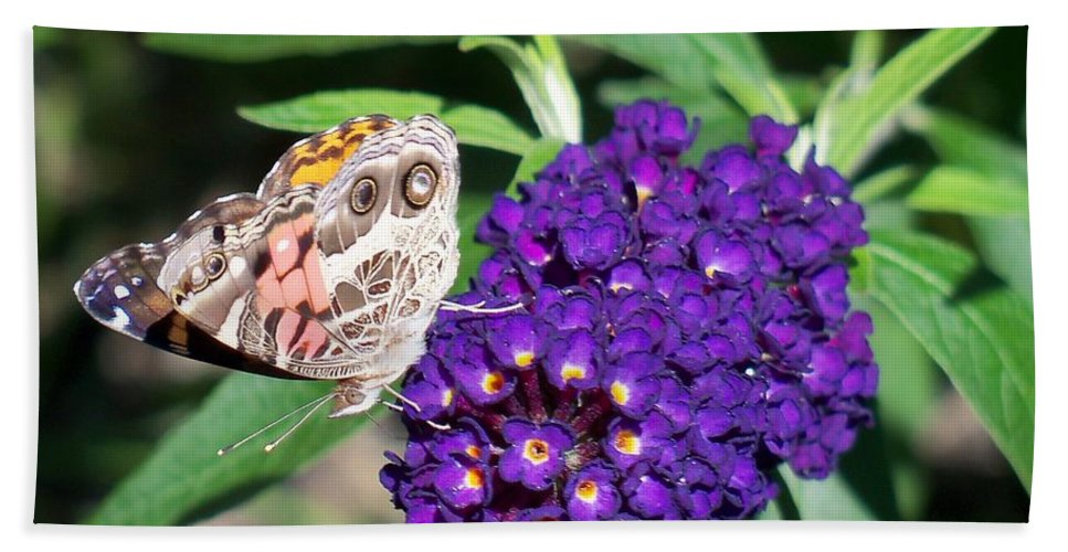 Nature Bath Sheet featuring the photograph Painted Lady Butterfly by Lynne Miller